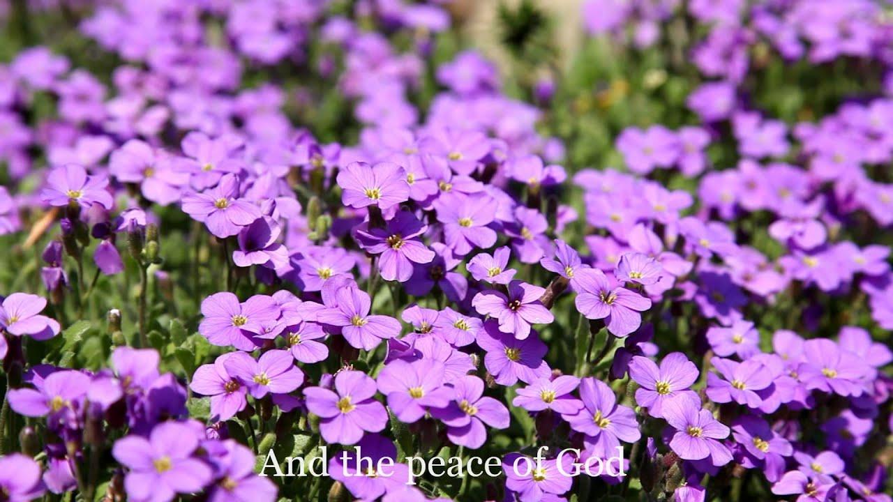 Scripture Lullabies Peace Of God Hd Youtube