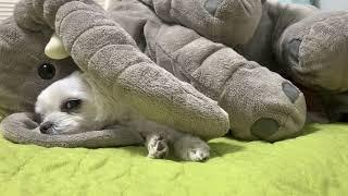내 코끼리 인형...