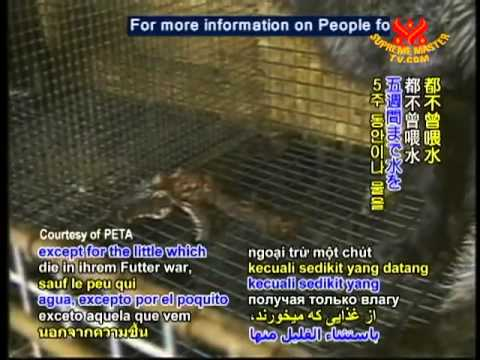 The horrific bloody truth of Fur Farming Industry
