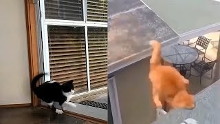 6 minutes of cats Falling/JUMPING FAILS