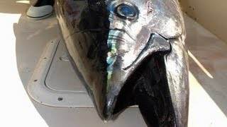 CAPE COD BLUEFIN TUNA ON STICKBAIT - YouFishTV