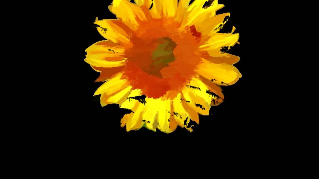 Graffiti Animation Graffiti Sunflower Animation Youtube