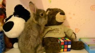 Декоративный кролик и немного об уходе за ним