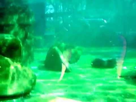 Pinguins onder water - Dresden Zoo - 20-03-2014 CLIP0243