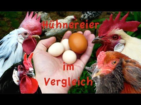 Welche Hühner Legen Braune Eier