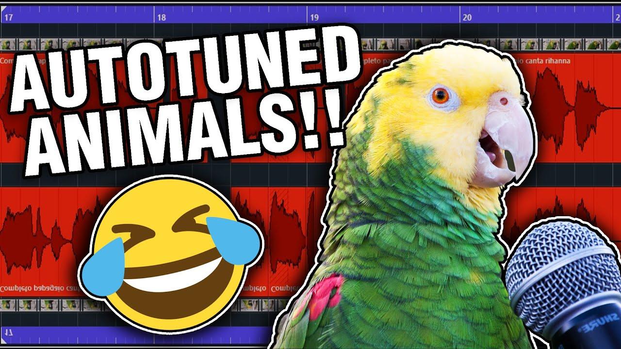 Animals With Autotune: Unbelievable!