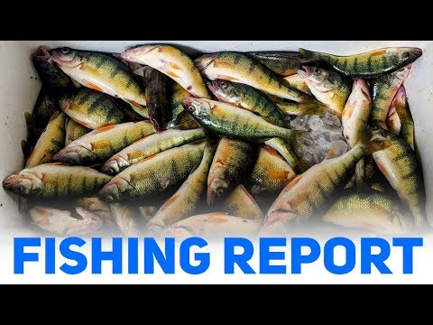 Fantastic Perch Fishing Out Of Port Clinton, Ohio!!!