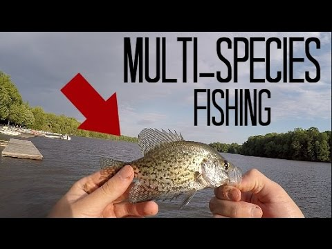 Multi-Species Fishing From The Docks at Lums Pond (Bear, DE)