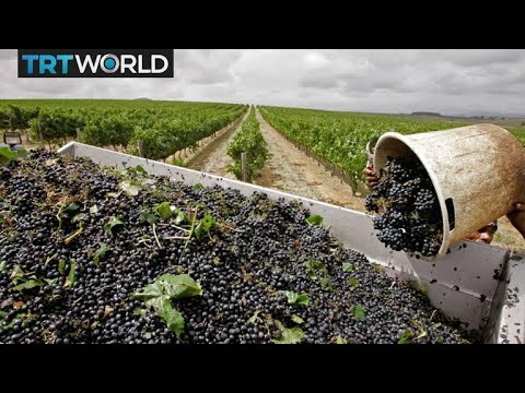 Black winemakers shake-up South African market | Money Talks