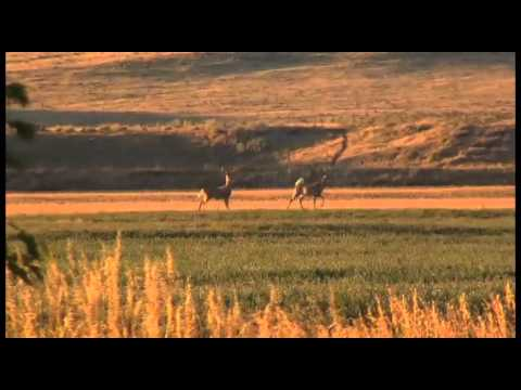 Hot Hunting in Wyoming