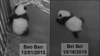 10-16-2015 Notion of Locomotion: Bei Bei vs Bao Bao