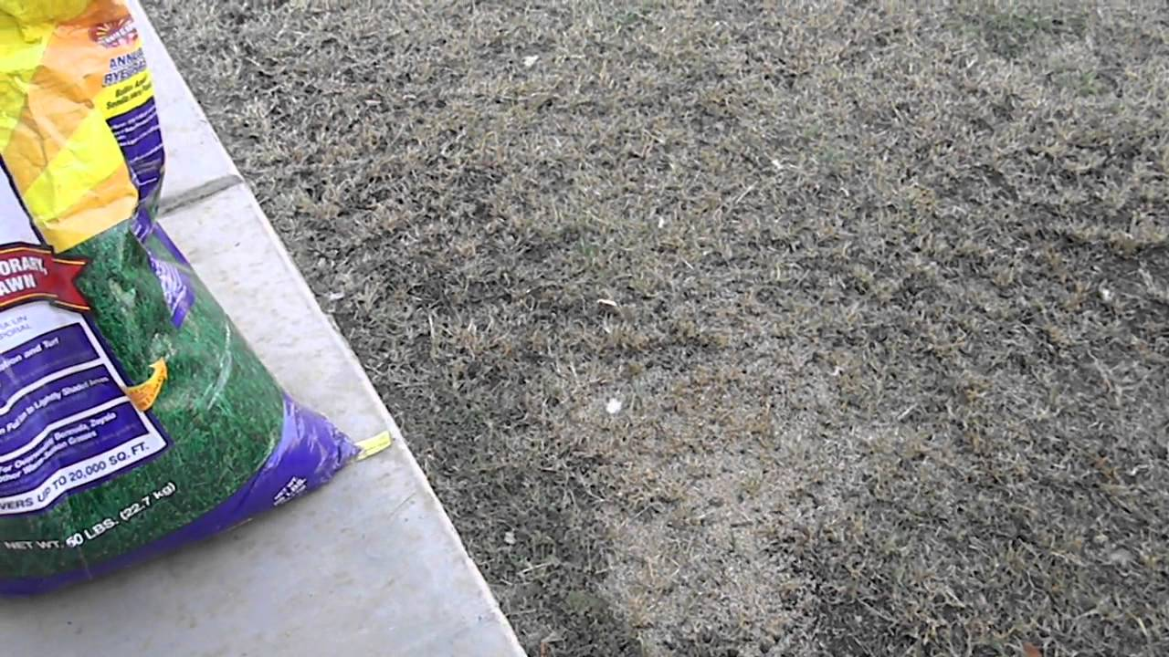 Best way to plant grass seed - Best Way To Plant Grass Seed 30