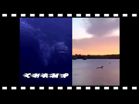 ★* NEWS *★*Breaking★*★ NEW FOOTAGE★CHAMP★The Lake Champlain Monster★ Canada Oct. 2015
