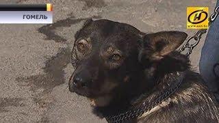 Время спасать животных! Фактов жестокого обращения с домашними питомцами всё больше