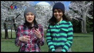 Bunga Sakura dan Awal Musim Semi di AS (3) - VOA Dunia Kita Mp3