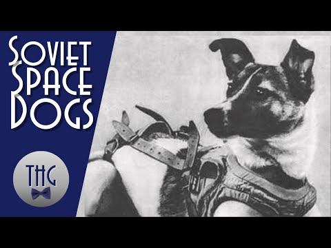 Animals of the Space Race streaming vf