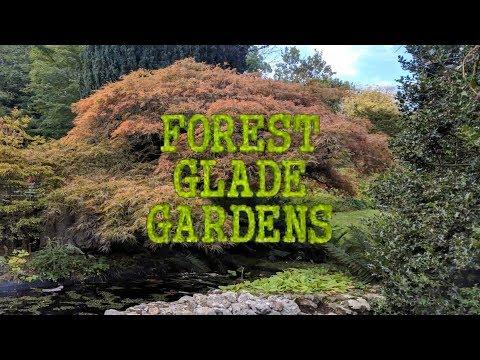 АВСТРАЛИЯ. Парк Forest Glade Gardens. AUSTRALIA.|Forest Glade Gardens.