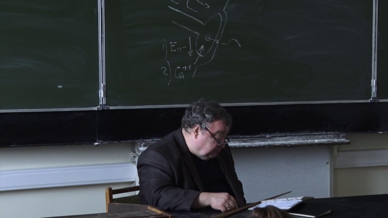 Физиология человека и животных. Профессор Каменский Андрей Александрович (Лекция 5)