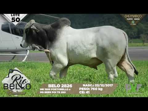 LOTE 50   BELO 2826
