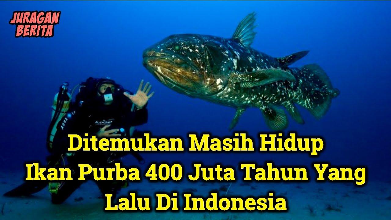 Membuat Kaget Seluruh Dunia ! Inilah Penemuan Ikan Purba Coelacanth Di Indonesia   Hewan Purba !