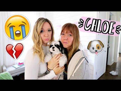 Download Youtube: Saying Goodbye to Chloe!! AlishaMarieVlogs