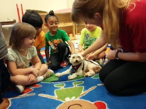 Summer Camp at Napa Valley Montessori - Preschool | Kindergarten | Elementary