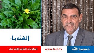 Dr Faid   Chicory   الهندباء   الخضر  المكونات الغذائية الأحد عشر  