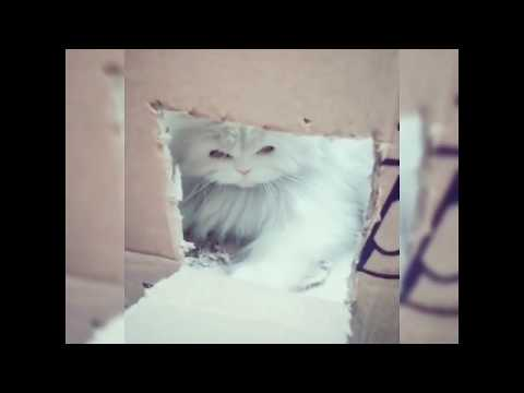 Cat being first time mother || Paro & her baby tuto (funny video with English subtitle) #pets #cats