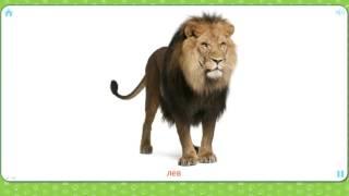 Изучаем диких животных - новые слова для детей