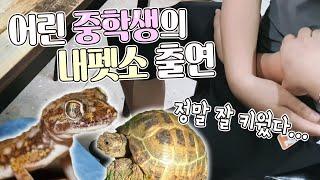 거북이와 도마뱀을 소개하려 찾아온 어린중학생  잘키웠다