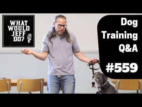 dog-training---malinois-dogs---walking-dogs-on-a-leash---what-would-jeff-do?-q&a-ep.559-(2019)