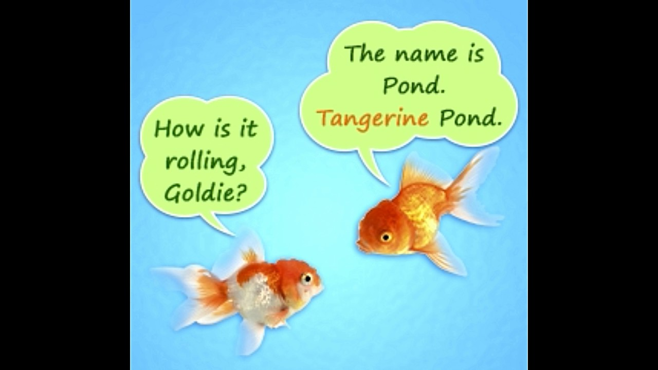 Cute and funny names for your pet fish that will crack you for Names for pet fish
