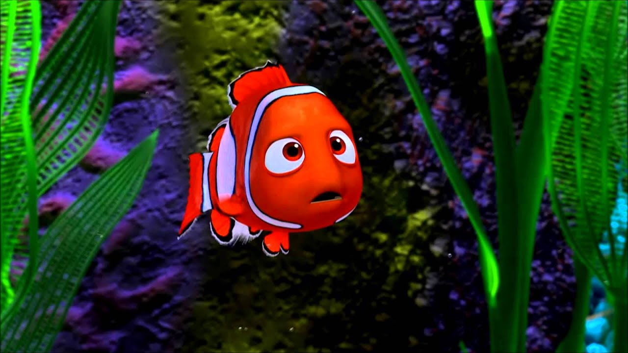 It's just an image of Massif Free Finding Nemo