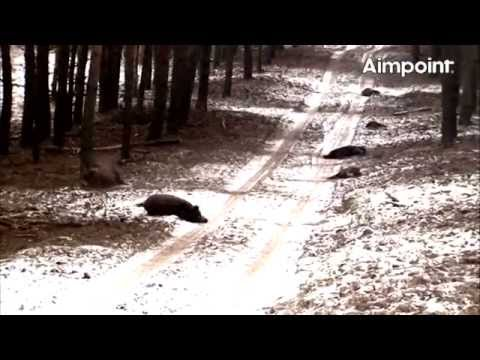 Aimpoint Trailer: Wild Boar Fever 4