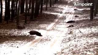 Repeat youtube video Aimpoint Trailer: Wild Boar Fever 4