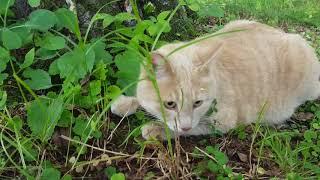 Кот ловит мышь ОХОТА Мышь спаслась бегством Cat catches mouse HUNTING Mouse escaped by flight