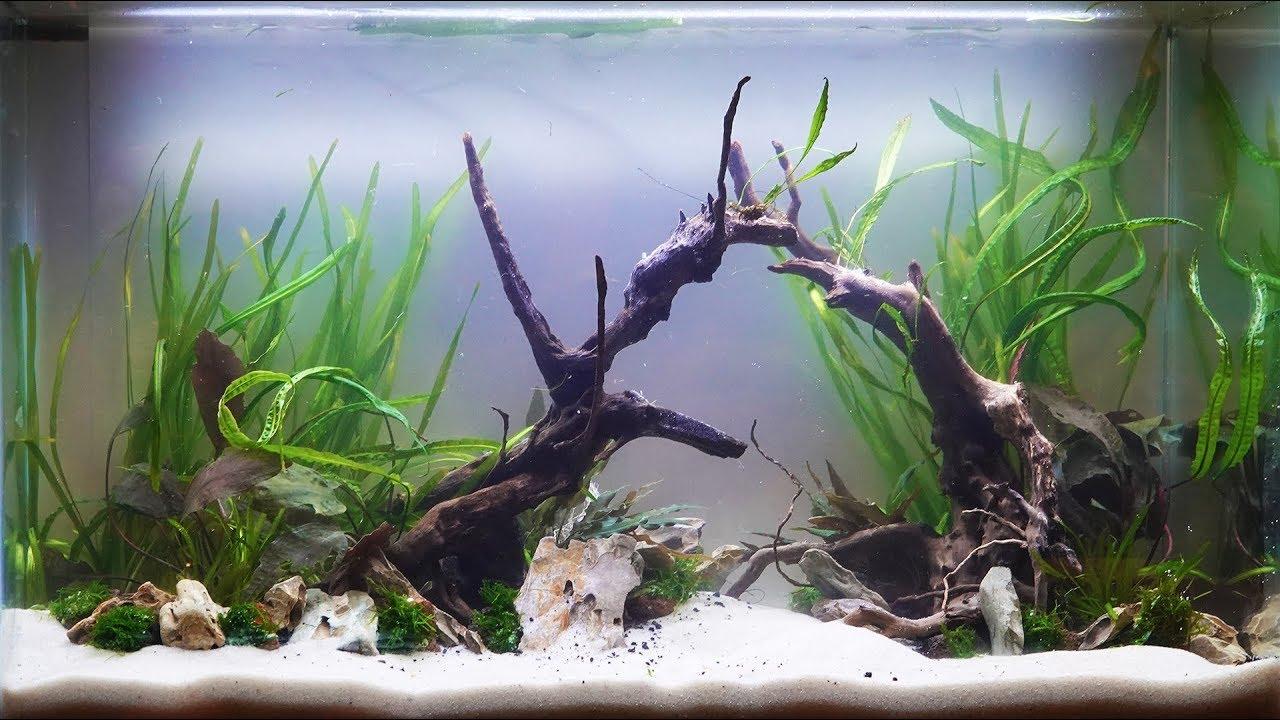 How to Aquascape an Aquarium 2018 - YouTube