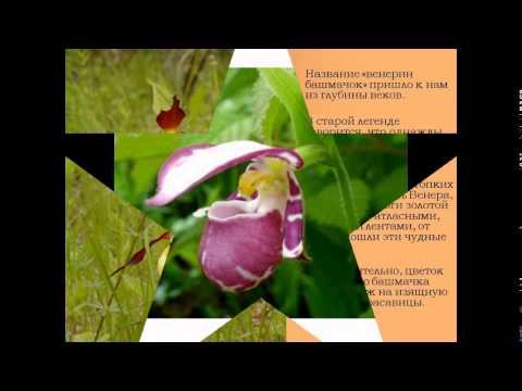 растение красной книге