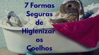 7 formas de higienizar os coelhos