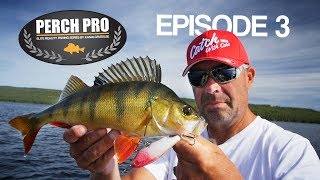 PERCH PRO 5 - Episode 3 - The Topwater War (with French & German subtitles)