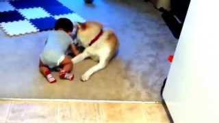 Akita Dog And Baby