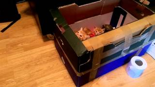 Kitten tries to escape box