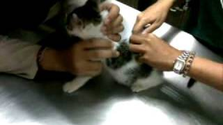 Junior mendapat suntikan vaksin pertama.