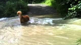大雨で増水した川で水遊び.