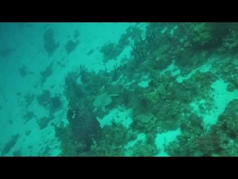 GOPR1206 - St. Lucia - Turtle