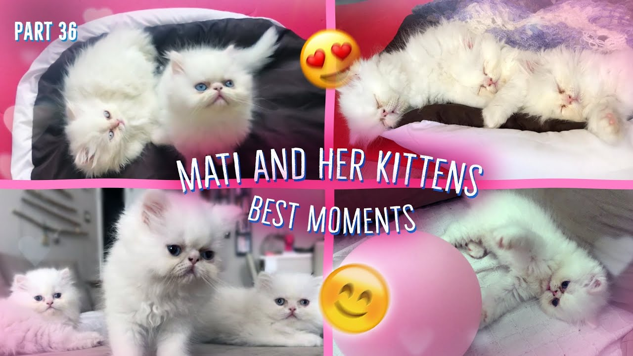 Mati and kittens. Best moments^:^