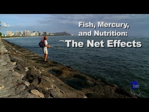 Fish, Mercury & Nutrition: The Net Effects