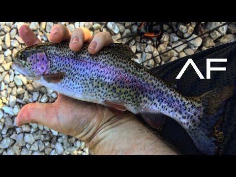 Branson Missouri Lake Taneycomo Trout Fishing!!!