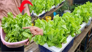 The easiest way t๐ grow hydroponic vegetables