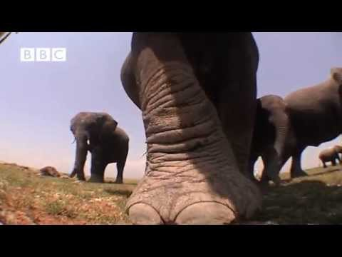 ELEPHANT PICKS UP CAMERA & FIlMS HER FAMILY! EXTRAORDINARY!